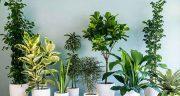 شعر در مورد گل و گیاه ، جملات احساسی و زیبا در مورد بوییدن گل رز و گلدون حافظ