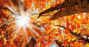 شعر در مورد پاییز از سعدی ، شعر معروف درباره پاییز از شهریار و فروغ و مولانا