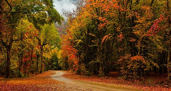 متن در مورد پاییز ، متن ادبی زیبا درباره ی رسیدن پاییز و انار + متن پاییز رفت
