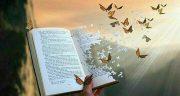 شعر پروانه باش ، کاش پرونه بودم + شعر پروانه و گل از حافظ و سعدی و شاملو