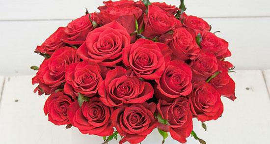 جملات زیبا در مورد گل سرخ ، متن زیبا درباره گل و گیاه و گلدون و هدیه گل