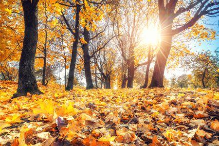 متن تولدم مبارک پاییزی ، متن ادبی برای تولدم پاییز ، متن زیبای تولد خودم در پاییز ، متن پاییزی تولدم مبارک