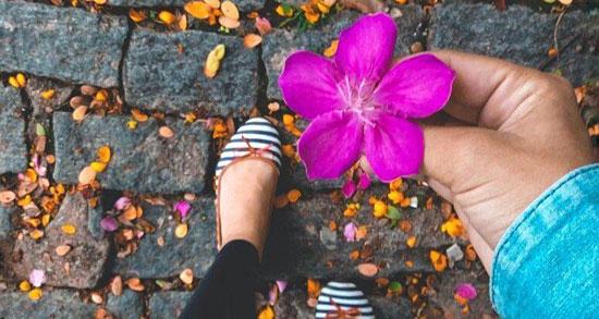 متن فلسفی در مورد گل ، جملات احساسی و متن زیبا درباره بوییدن گل و گیاه و گلدون