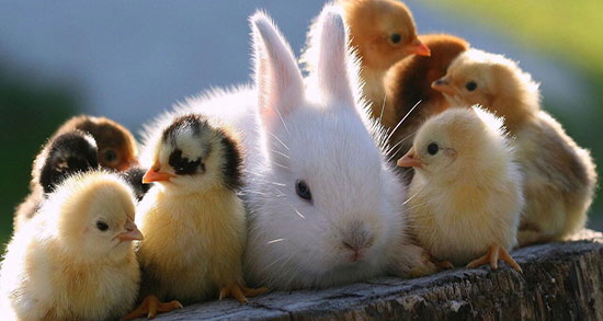 متن در مورد حیوانات ، سگ و انسان + متن انگلیسی و سخنان گاندی درباره حیوانات