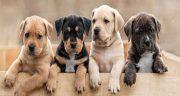 متن در مورد سگ و انسان ، مهربانی و معرفت سگ وفادار + متن از زبان سگ