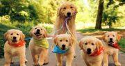 متن درباره سگ و وفاداری ، شعر کوتاه وفای سگ + متن سگ برای پروفایل