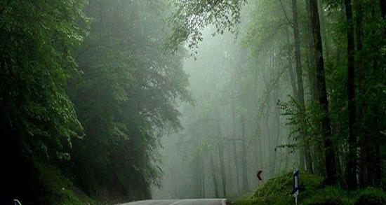 متن در مورد جنگل مه آلود ، متن کوتاه درباره جنگل و تنهایی و عشق + هوای مه آلود