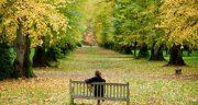 متن در مورد جنگل و تنهایی ، جنگل مه آلود + متن سکوت جنگل و عشق و درخت