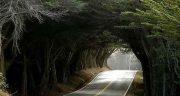 متن درباره سکوت جنگل ، متن زیبا در مورد جنگل شمال و تنهایی + جنگل مه آلود