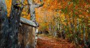 متن در مورد جنگل ، مه آلود و عشق و سکوت جنگل شمال و درخت