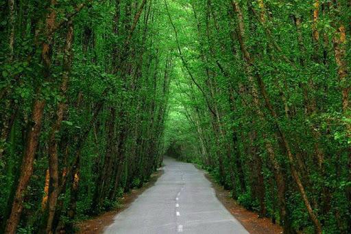 متن در مورد جنگل شمال ، سکوت جنگل و تنهایی + جنگل و درخت و عشق