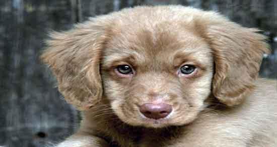 دلنوشته برای سگ ، استوری در مورد سگ ، متن از زبان سگ ، متن انگلیسی در مورد وفای سگ