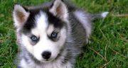 متن در مورد سگ باوفا ، متن از زبان سگ + متن وفاداری سگ برای پروفایل