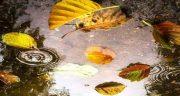 متن در مورد آب زلال ، شعر عاشقانه و متن در مورد زلال بودن و زلالی آب و رودخانه
