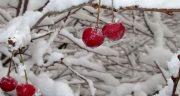 متن زمستان است ، اخوان ثالث و متن کوتاه زمستانی + متن زمستان است دیگر دل زمین