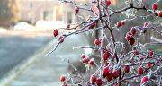 متن ادبی زمستان ، گذشت و بهار آمد + زمستان سرد و برف و سرما و بهار