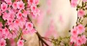 یک شعر درباره عید نوروز ، یک بیت شعر کوتاه و زیبا برای عید نوروز مبارک