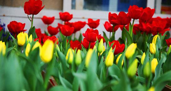 شعر سال نو کودکانه ، شعر کودکانه بهار بهار بهاره + شعر سال نو برای کودکان