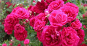 اشعار نوروز و بهار ، دوبیتی و شعر در وصف بهار از مولانا و شاملو و سهراب سپهری