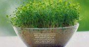 شعر در مورد عید نوروز کودکانه ، شعر کودکانه عمو نوروز + شعر عید نوروز مبارک