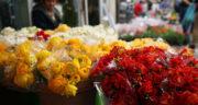 شعر سال نو سعدی ، شعر سعدی برای تبریک سال نو + شعر در مورد بهار از سعدی