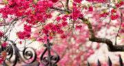 اس ام اس تبریک بهار ، اس ام اس تبریک تولد در بهار + تبریک بهار عاشقانه