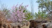 متن در مورد بهار و عید ، و گل + متن زیبا و ادبی در مورد بهار و عید نوروز