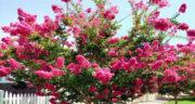بهترین اشعار برای بهار ، شعر های دو بیتی درباره بهار از مولانا و شاملو
