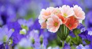 شعر درباره بهار ، و عید نوروز و شکوفه کوتاه و کودکانه + شعر دو بیتی در مورد بهار