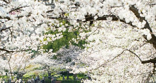 شعر درباره ی بهار دو بیت ، دو بیت شعر درباره ی بهار از سعدی و حافظ