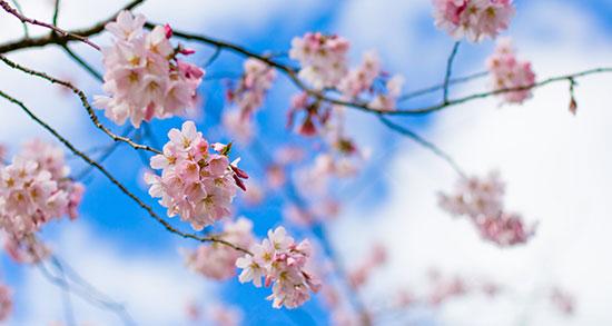 شعر کوتاه درباره بهار ، و زیبایی های آن و گل و عید از سعدی و حافظ