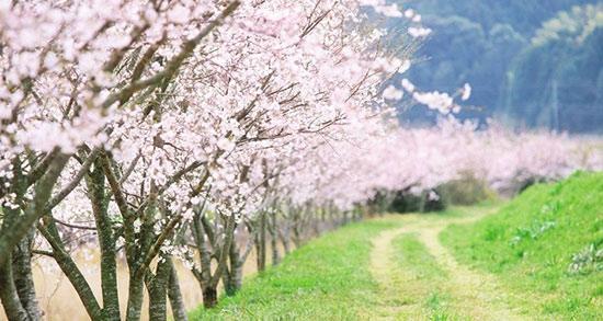 یک متن برای بهار ، یک بیت شعر برای فصل بهار + یک شعر بهاری کوتاه
