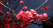 اس ام اس زیبای بهاری ، جملات زیبا در مورد بهار + آمدن بهار مبارک