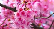 متن قشنگ برای بهار ، و عید نوروز و شکوفه + متن قشنگ بهاری