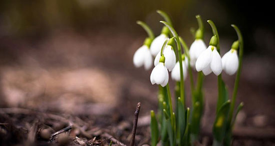 متن در مورد بهار و سال نو ، متن زیبا و ادبی درباره بهار و عید نوروز