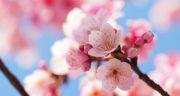 متن زیبا در مورد شکوفه های بهاری ، یک جمله زیبا و متن بلند در وصف بهار