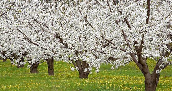 شعر بهار کودکانه ، برای پیش دبستانی + شعر کودکانه بهار چقدر قشنگه
