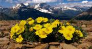 شعر های دوبیتی درباره بهار ، تک بیتی درباره بهار + شعر در مورد اسم بهار