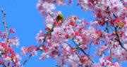 متن انگلیسی در مورد فصل بهار با ترجمه ، فارسی + متن زیبا انگلیسی درباره بهار