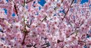 متن ادبی درباره بهار ، و نوروز و طبیعت کوتاه + متن عادی و بلند در مورد بهار