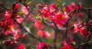 اس ام اس بهاری جدید ، اس ام اس تبریک عید نوروز فلسفی + متن بهار
