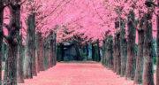 اشعار درباره بهار ، و نوروز و گل و شکوفه از سعدی + تک بیتی درباره بهار