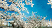 شعر درباره بهار و عید ، نوروز و گل + شعر کوتاه در مورد بهار از سعدی