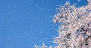شعر درباره بهار و نوروز ، شعر دوبیتی کوتاه درباره ی عید نوروز و بهار