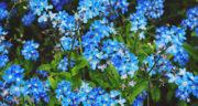 شعر برای تبریک بهار ، و نوروز + شعر زیبا و کوتاه حافظ برای تبریک بهار