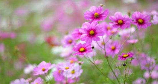 اشعار بهار شاعران ، اشعار بهاری از شاعران معاصر بزرگ + شعر در مورد بهار