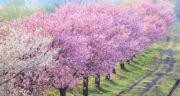 شعر در مورد بهار شیراز ، شعر در وصف بهار نارنج از حافظ شیرازی
