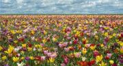 شعر در وصف بهار و یار ، شعر های دو بیتی درباره بهار از شاملو و حافظ و سعدی