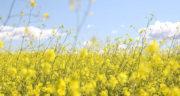 شعر برای آمدن بهار ، شعر بهار از سهراب سپهری + شعر کوتاه درباره بهار