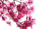 شعر در وصف بهار ، و سال نو و عید نوروز + بهار شیراز و یار از سعدی